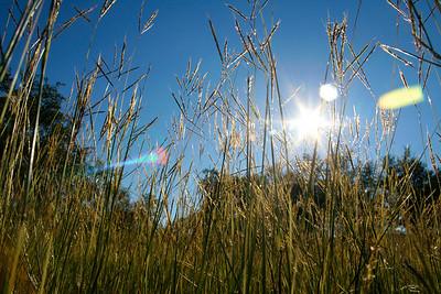 061112- Grass & Sky 1