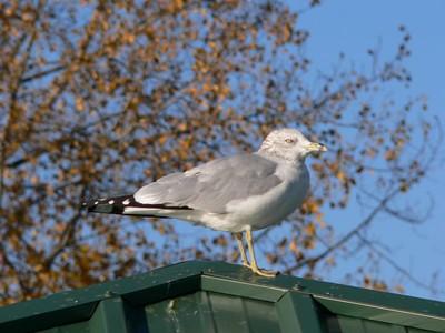 Morning at Haverstraw Bay Park