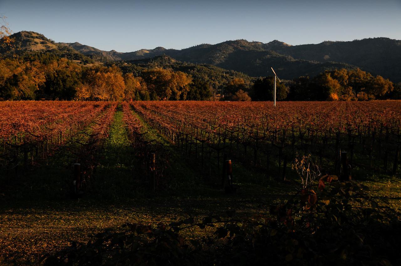 St Helena, Napa Valley, CA