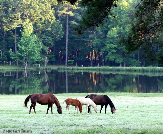 "5-29-06-- Monday went for a drive after dinner and got this shot of horses by a pond.  bucolic pose.        ""I am a success today because I had a friend who believed in me and I didn't have the heart to let him down...""  -- abraham lincoln"