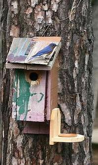 6-12-06-- Monday<br /> <br /> pardonnez  moi while I add 2 more photos for Monday (egads! that makes 3!)  there actually was quite a bit of drama around this bluebird house in the afternoon.  <br /> <br /> <br /> a male/female couple hovered around it a bit, he came with twigs in his beak and then 2 other males came and the 3 males got in a tiff over the house (female?).  <br /> <br /> here's one bluebird staking his territory on the house.  <br /> <br /> the rope that the following picture shows the bird using as his perch is just above this fellow.