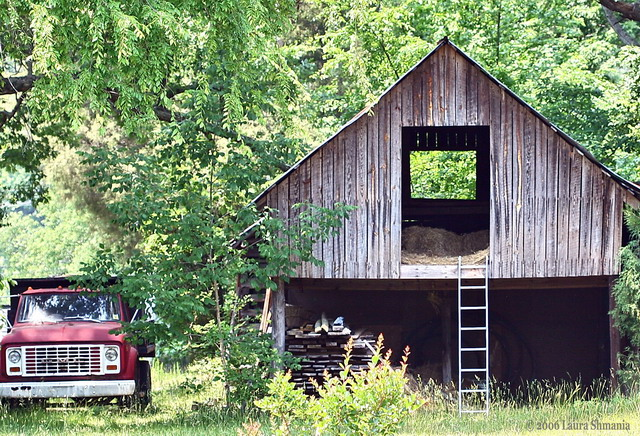5-25-06-- Thursday- here is Monday's barn in a different light. slightly different angle and context.