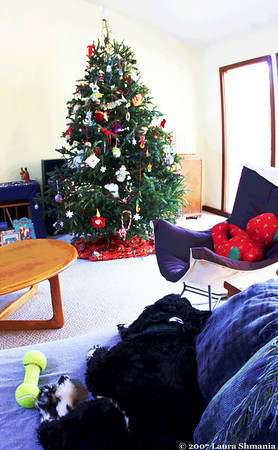 "1-3-08-- Thursday<br /> it's a dog's life #2<br /> still have our tree up!  time slipping by me so fast!<br /> <br /> ""a boy can learn a lot from a dog: <br /> obedience, loyalty, and the importance of <br /> turning around three times before lying down.""<br /> <br /> -- robert benchley"