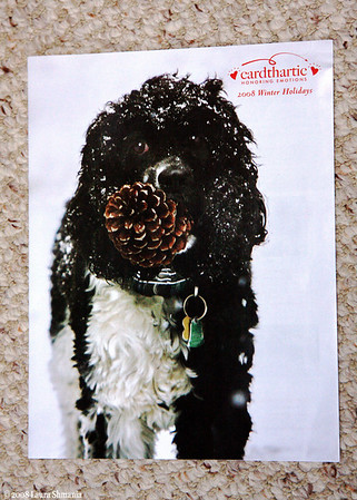"6-25-08-- wednesday<br /> I got this card catalog today with my photo of BaileyBoy-snow-covered-with-pinecone on the front cover!  the company purchased the image for their winter line.  it has also been made into a winter holiday card.  :)<br /> <br /> quote on the card:<br /> ""of all the gifts we get or give...<br /> the greatest of them is love!  happy holidays!""<br /> <br /> -- message by meron reinhart"