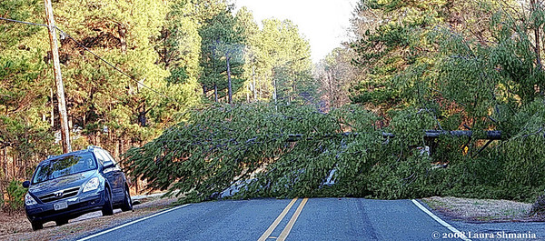 "2-10-08-- sunday<br /> tree fallen across the road!<br /> <br /> ""life is full of obstacle illusions.""<br /> <br /> -- grant frazier"