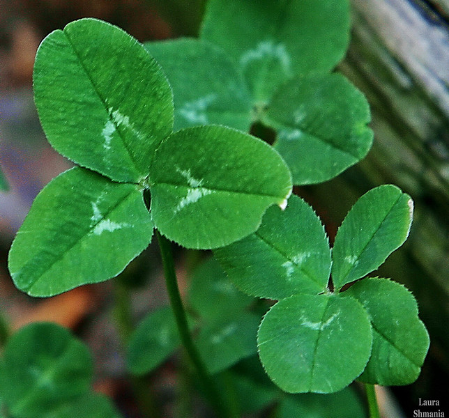 """5-19-07-- Saturday<br /> <br /> """"a best friend is like a four leaf clover: <br /> hard to find and lucky to have."""" <br /> <br /> -- author unknown"""