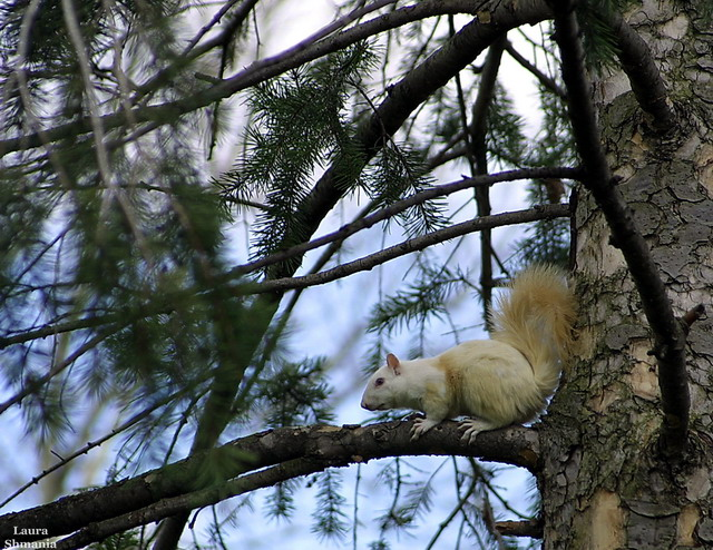 """4-13-07-- Friday the 13th  <br /> ooooooohhh!  albino squirrel- for real!<br /> on oberlin college campus.<br /> <br /> <br /> """"we must not allow the clock and the calendar <br /> to blind us to the fact that each <br /> moment of life is a miracle and mystery.""""<br /> <br /> -- h. g. wells<br /> <br /> <br /> <br /> more photos of squirrel here:<br /> <br /> <br /> <br /> <a href=""""http://butterflites.smugmug.com/gallery/2312249"""">http://butterflites.smugmug.com/gallery/2312249</a>"""