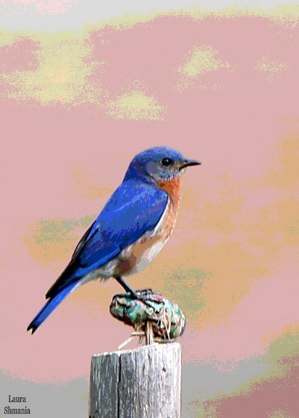 "5-11-07-- Friday<br /> <br /> ""therefore, with angels, etc...""<br /> <br /> -- book of common prayer<br /> <br /> <br /> <br /> we have a nesting pair of bluebirds in a nearby bluebird house!  <br /> photo link:<br /> <br /> <a href=""http://butterflites.smugmug.com/gallery/1359528"">http://butterflites.smugmug.com/gallery/1359528</a>"
