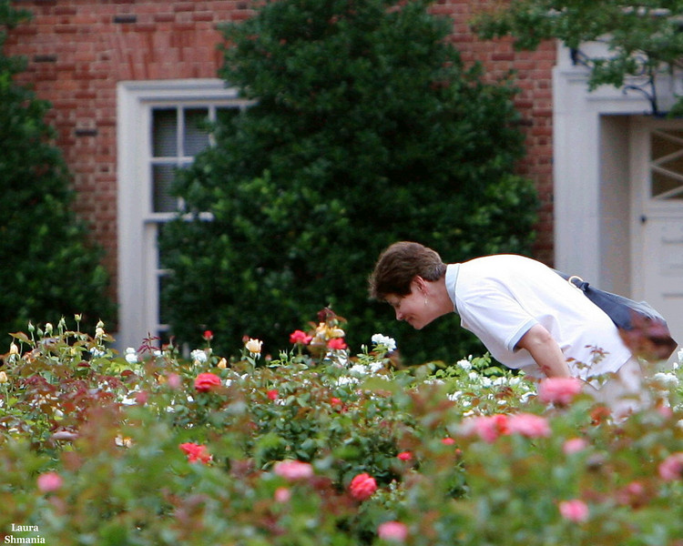 "6-30-07-- Saturday<br /> <br /> ""take time to smell the roses<br /> before it is too late:<br /> today is full of promise<br /> tomorrow will not wait.""<br /> <br /> -- marilyn ferguson"