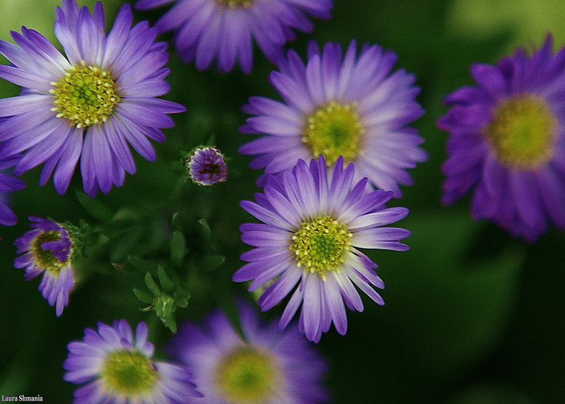 """6-5-09-- friday<br /> purple and green<br /> <br /> """"I will be the gladdest thing under the sun! I will touch a hundred flowers and not pick one.""""<br /> <br /> -- edna st. vincent millay"""
