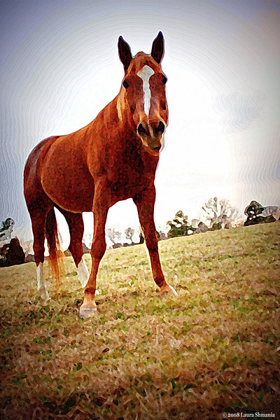 """2-18-09-- wednesday<br /> <br /> """"horse sense - sound practical judgment""""<br /> <br /> -- the free dictionary - online"""