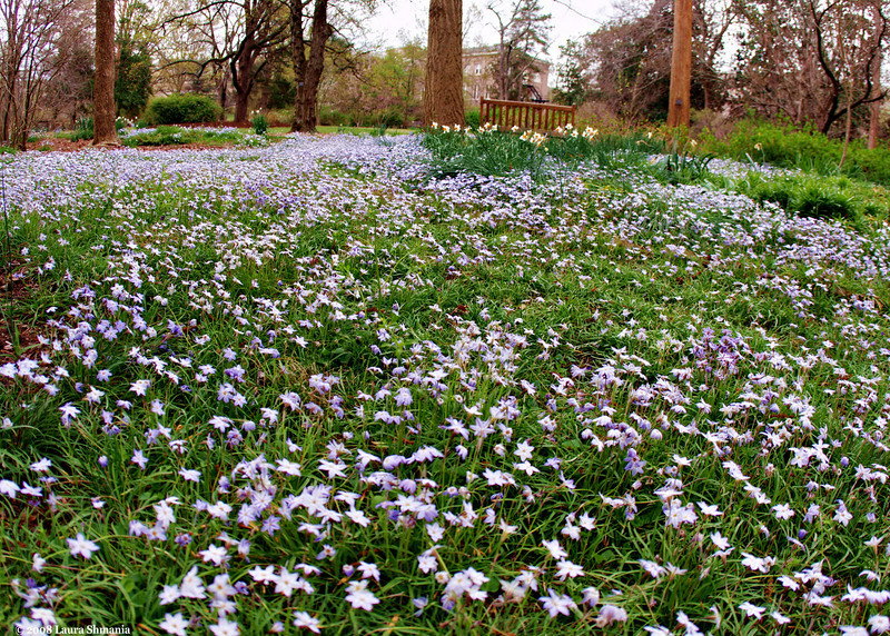 "4-1-09-- wednesday<br /> purple carpet<br /> <br /> ""we had the sky, up there, all speckled with stars, and we used to lay our backs and look up at them, and discuss about whether they was made, or only just happened.""<br /> <br /> -- mark twain, huckleberry finn"
