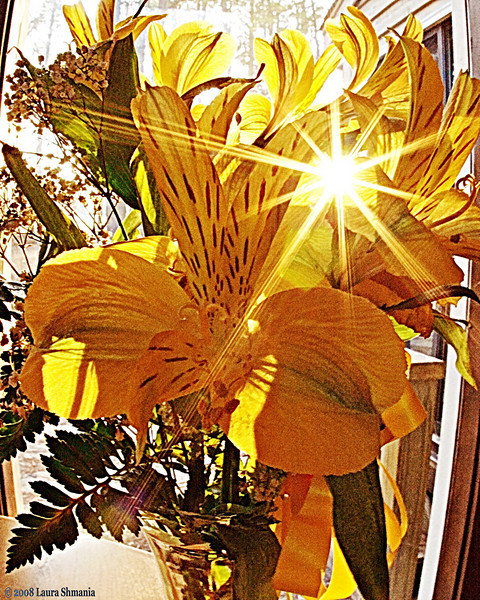 """3-6-09-- friday<br /> late aftenoon sun shining thru flowers<br /> <br /> """"if you want to make a song more hummy, <br /> add a few tiddely poms.""""<br /> <br /> -- a. a.milne"""