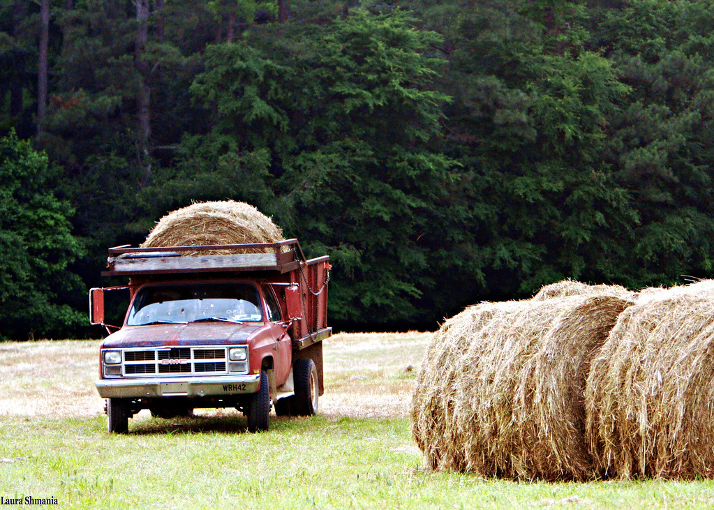 6-3-09-- wednesday<br /> bringing in the hay