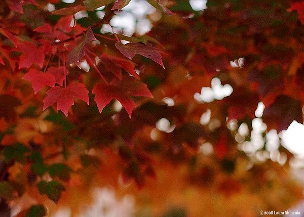"""11-8-08-- saturday<br /> <br /> <br /> """"autumn is a second spring when every leaf is a flower.""""<br /> <br /> -- albert camus"""
