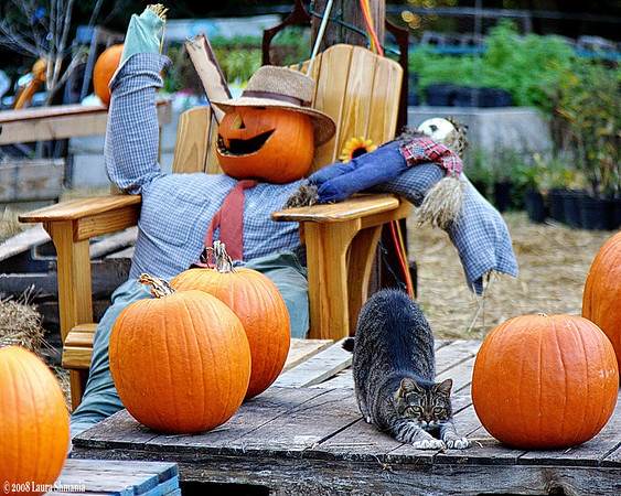 """10-12-08-- sunday<br /> at the pumpkin patch...<br /> <br /> """"every moment is a golden one <br /> for him who has the vision <br /> to recognize it as such.""""<br /> <br /> -- henry miller"""
