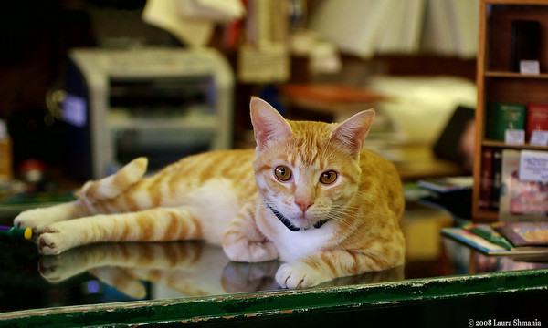 """9-26-08-- friday<br /> bookshop cat on the cash counter!<br /> <br /> """"cats can work out mathematically the exact place to sit that will cause most inconvenience.""""<br /> <br /> -- pam brown"""