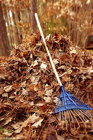 "11-28-08-- friday<br /> gorgeous day - temps in the 60's - perfect for... well, ok... raking leaves!<br /> <br /> ""climb the mountains and get their good tidings. nature's peace will flow into you as sunshine flows into trees. the winds will blow their own freshness into you, and the storms their energy, while cares will drop away from you like the leaves of autumn.""<br />     <br /> -- john muir"