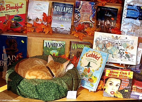 "11-23-08-- sunday<br /> catnap in the bookshop window.<br /> <br /> ""cats seem to go on the principle that it never does any harm to ask for what you want.""<br /> <br /> -- joseph wood krutch"