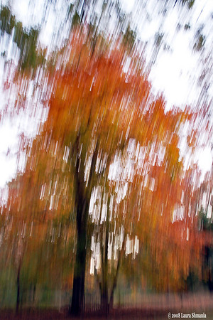 11-11-08-- slow shutter speed. with moving the camera up and down.