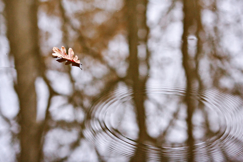 11-31-09-- monday<br /> leaf and ripples on water