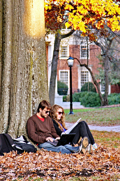 11-20-09-- friday<br /> studying under golden leaves
