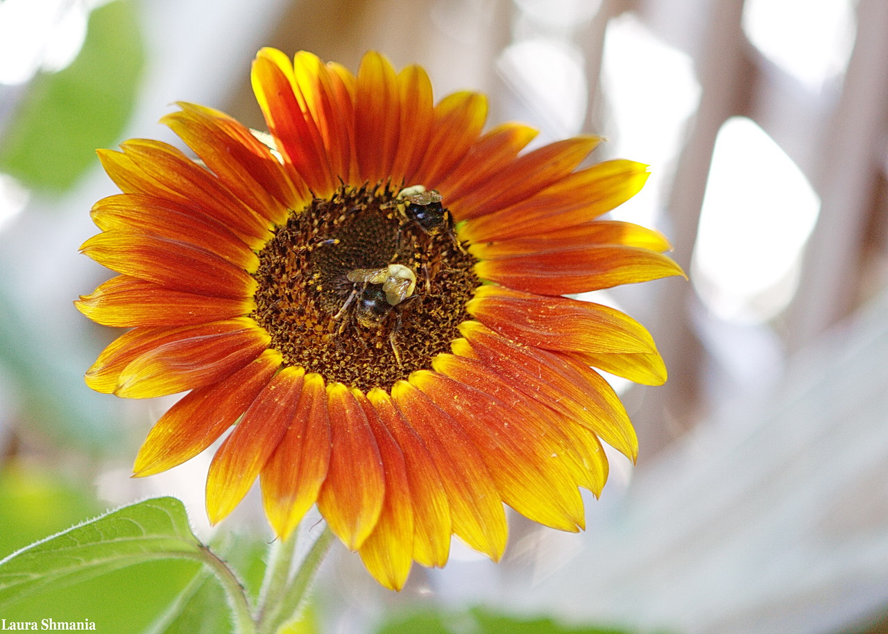 """7-15-09-- wednesday<br /> busy bees<br /> """"the sun, with all those planets revolving around it and dependent on it, can still ripen a bunch of grapes as if it had nothing else in the universe to do.""""<br /> -- galileo"""