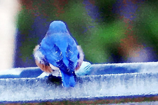 11-19-09-- thursday<br /> gray rainy day. need some color and frivolity ! so this is a re-run from last spring.    backend of bluebird on birdbath.