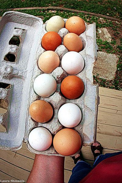 8-17-09-- monday<br /> eggs of a different color- from a local farmer- not the grocery store genre...