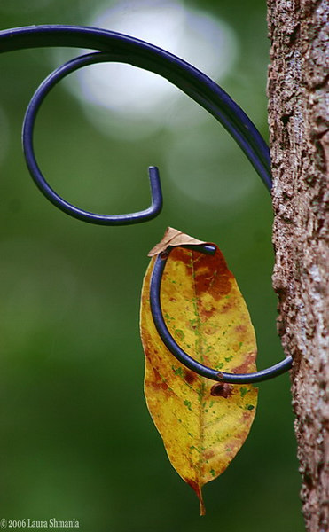 """9-23-06-- Saturday<br /> first fall leaf photographed this season.  <br /> tucked itself onto the birdfeeder holder.<br /> <br /> <br /> <br /> """"when autumn mists gather and leaves fall gently down,<br /> new strength in me rises to bear life's waiting crown.""""<br /> <br /> judy"""