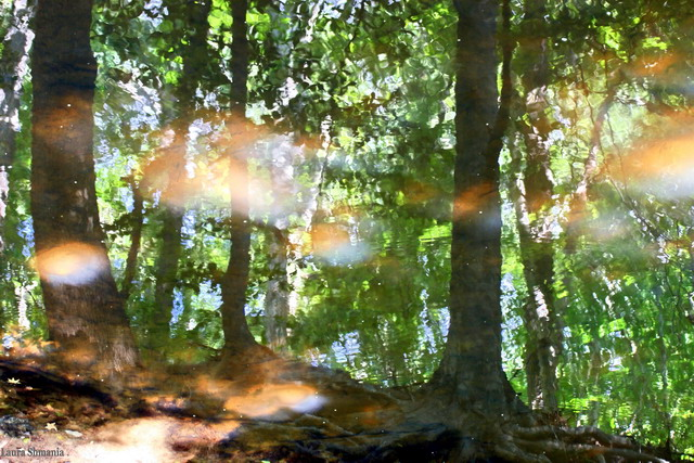 "9-16-06-- Saturday<br /> reflections of sun and trees in the creek<br /> <br /> ""beauty is a form of genius--is higher, <br /> indeed, than genius, as it needs no explanation. <br /> it is of the great facts in the world like sunlight, or springtime, or the reflection in dark water of that silver shell we call the moon.""<br />     <br /> <br /> -- oscar wilde"