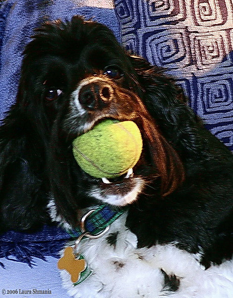 """8-24-06-- Thursday<br /> bailey boy- ever ready to play ball.<br /> <br /> <br /> <br /> """"poetry and hums aren't things which you get, <br /> they're things which get you. <br /> and all you can do is go where they can find you.""""<br /> <br /> <br /> -- winnie-the-pooh, a. a. milne"""