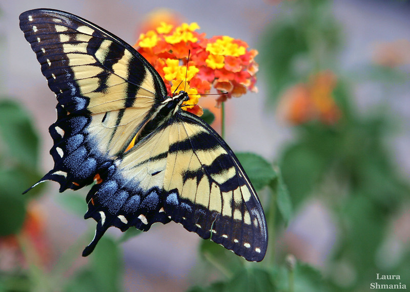 """9-11-07-- Tuesday<br /> I hesitated to post yet another butterfly...!<br /> <br /> <br /> """"God is a verb, not a noun.""""<br /> <br /> -- buckminster fuller"""
