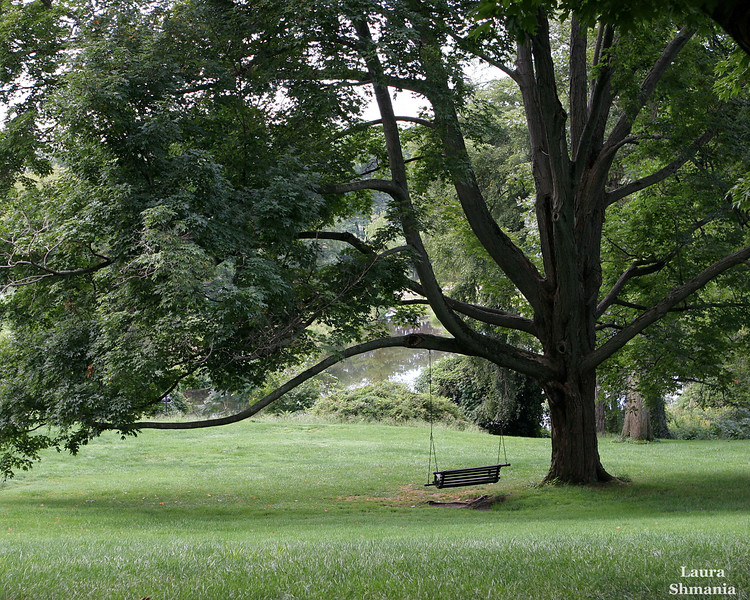 """8-28-07-- Tuesday<br /> a quiet moment on the Smith College campus - before the students arrive<br /> <br /> <br /> """"why are there trees I never walk under but large and melodious thoughts descend upon me?""""<br /> <br /> -- walt whitman"""