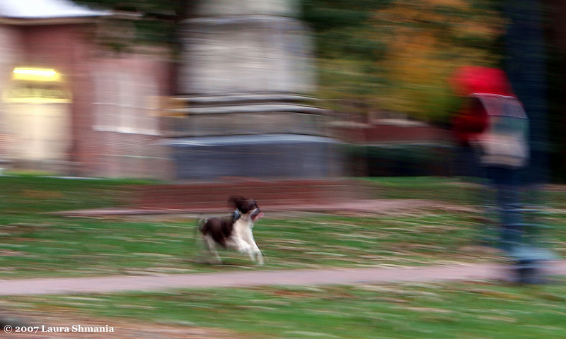 "11-16-07-- Friday<br /> pooch frolicking in the quad <br /> <br /> ""the most affectionate creature in the world <br /> is a wet dog. ""<br /> <br /> -- ambrose bierce"
