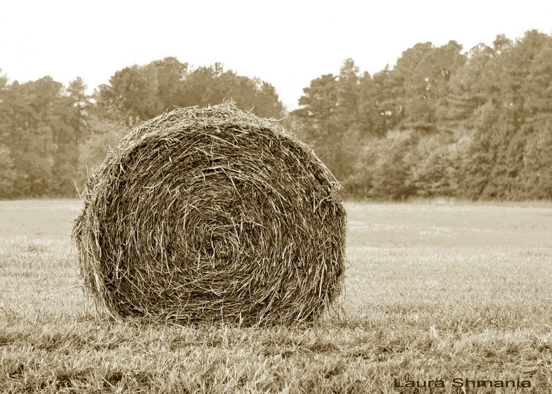 """10-24-07-- Wednesday hay-- worth its weight in gold.  farmers are buying hay from out of state due to the drought-- and paying a hefty price.  last year, this field was covered with bales- this year, one.  I have a gallery of past years' hay :  <a href =""""http://butterflites.smugmug.com/gallery/1496935"""">click here</a >   """"I believe that to meet the challenges of our times, human beings will have to develop a greater sense of universal responsibility. Each of us must learn to work not just for oneself, one's own family or nation, but for the benefit of all humankind. Universal responsibility is the key to human survival. It is the best foundation for world peace.""""  The Dalai Lama"""