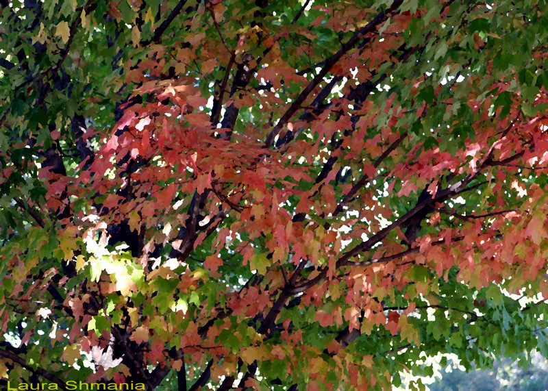 """10-31-07-- Wednesday<br /> <br /> <br /> """"trees are the earth's endless effort to speak to the listening heaven.""""<br /> <br /> -- rabindranath tagore"""