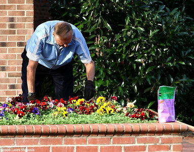 "Chairman of the ""Friends of Downtown Chapel Hill""  tends one of the 60 flower boxes the group oversees as a beautification project."