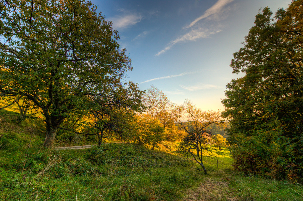 OrchardLooking at all the snow outside, how about a more summer/autumn like photo today :)HDR from three shots, taken with Canon 450D with Sigma 10-20mm lens.
