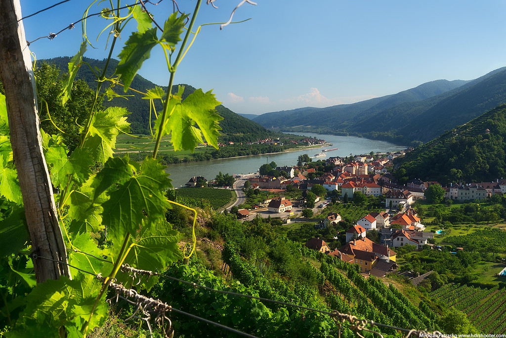 Vineyards over Spitz in Austria