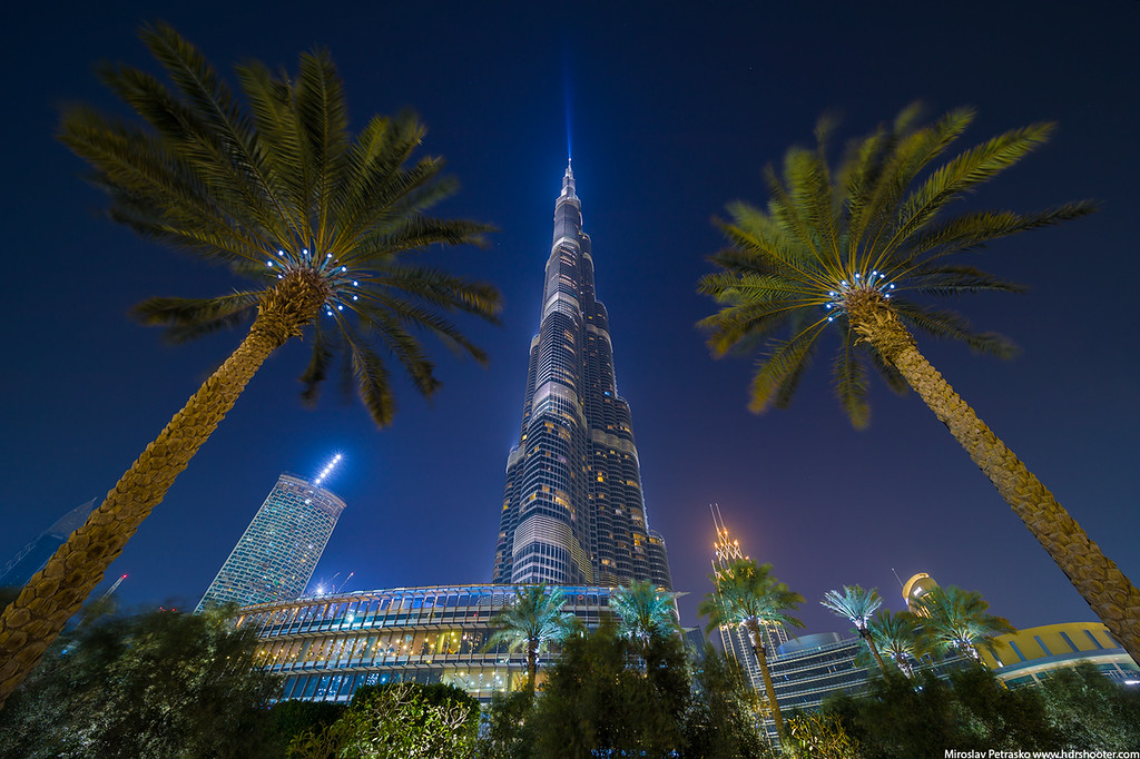 Palms under the Burj Khalifa, Dubai, UAE