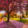Colorful spring morning