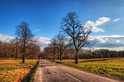 Disappearing Road  Just a simple composition here. As it was quite away from the main road, there were very few cars on this road, and I could take this shot.  HDR from three shots, taken with Canon 450D with Sigma 10-20mm lens.  I took this photo right next to the Cerveny kamen (Red stone) castle in Slovakia.