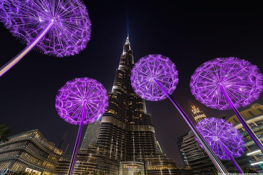 Purple dandelions under the Burj Khalifa, Dubai, UAE