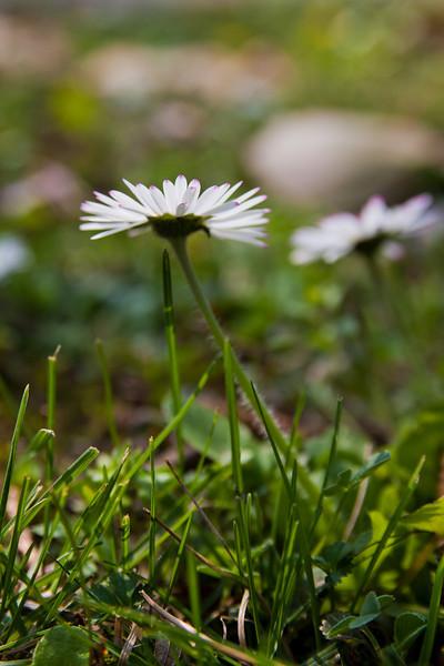 Little bit of spring nature from the Botanical garden in Bratislava, Slovakia.