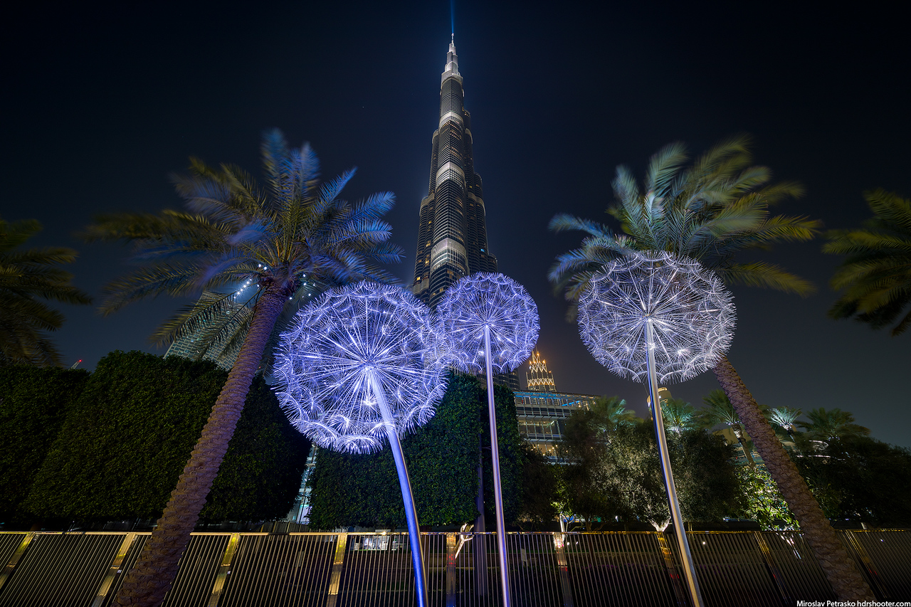 Palms, dandelions and the Burj Khalifa
