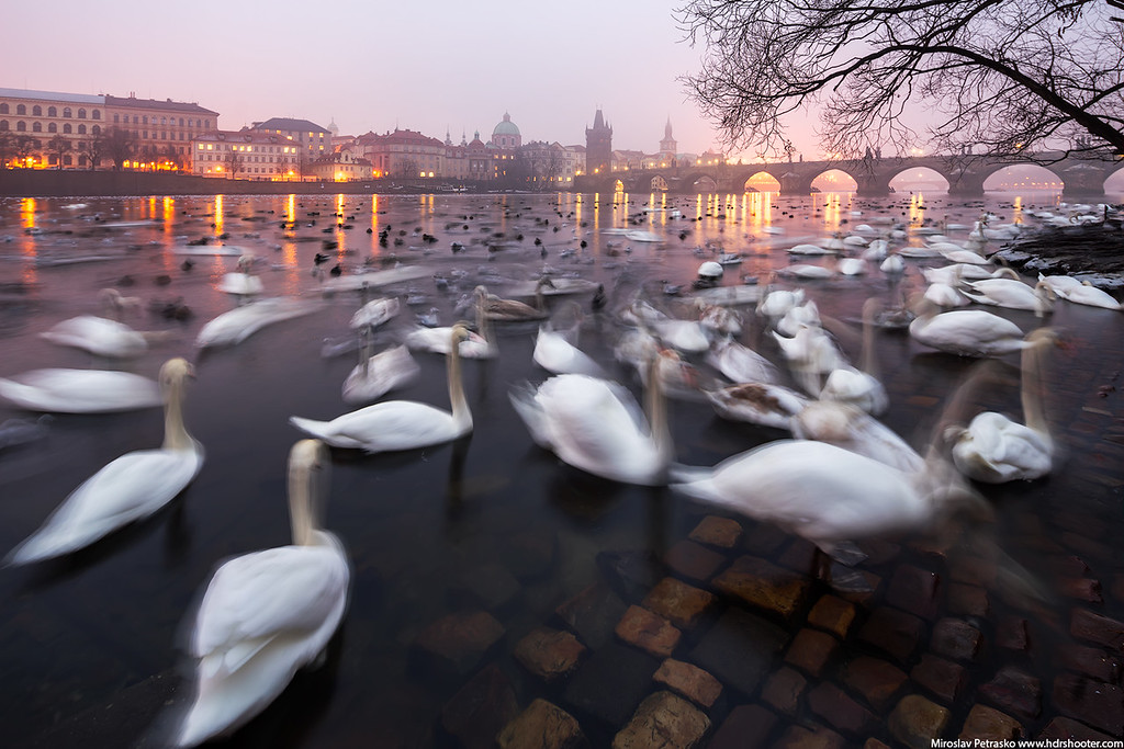 The bird invasion in Prague, Czech republic