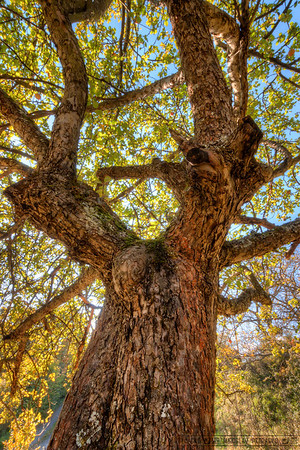 The old tree I think it's because of the ugly weather outside, I'm inclined to edit more summer photos. And this is one of those. It's all about texture here, and that's great in HDR :)
