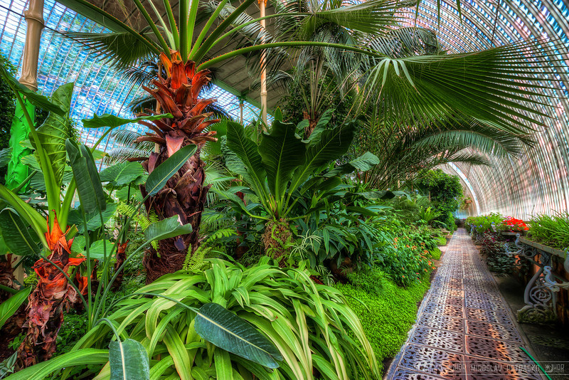 Palm in the Palm house