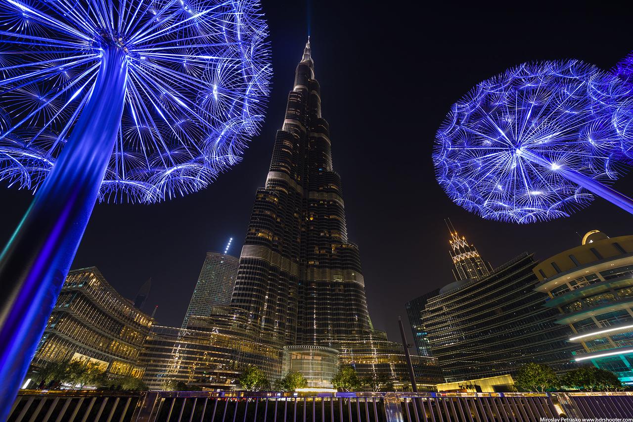 More Dandelions, Dubai, UAE